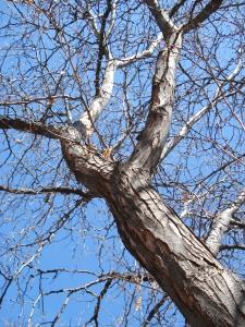 Santa Fe Trees 3