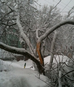 snowzilla claims a victim